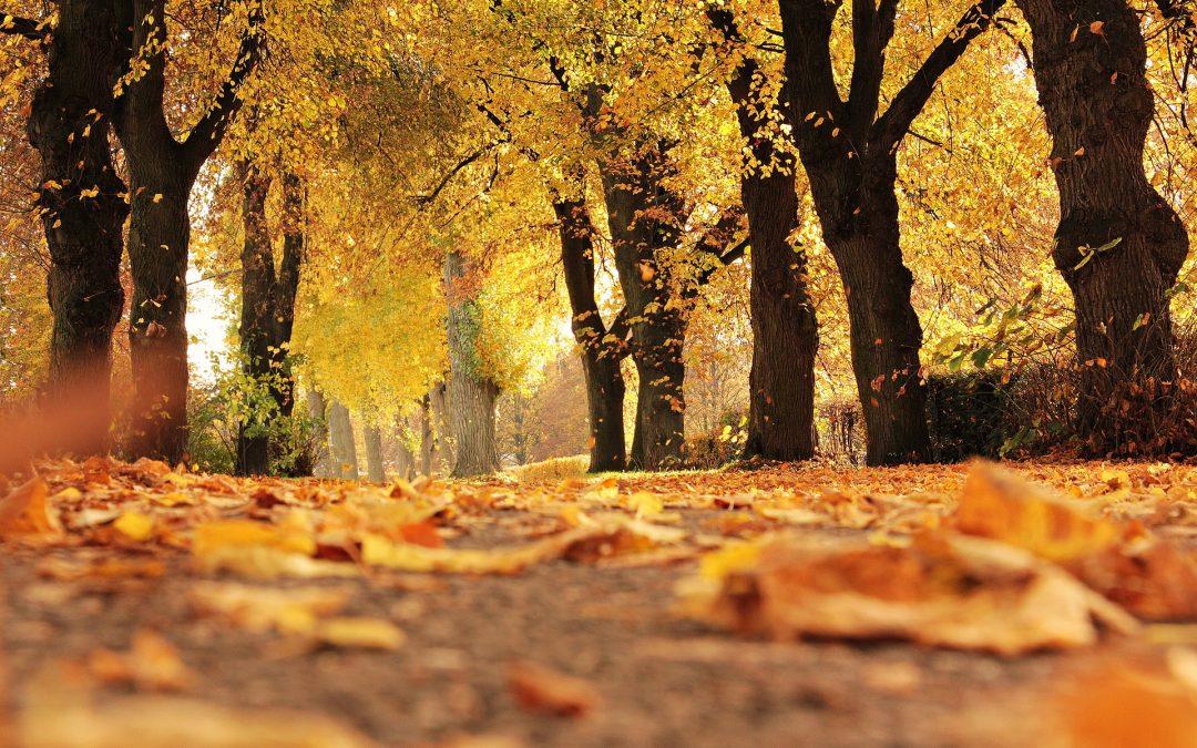 Herbstkur für Weishäupl-Schirme